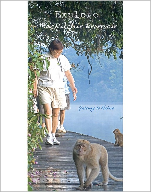 MacRitchie Reservoir Brochure